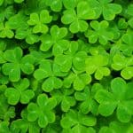 Over 40 Dating: Leverage the Luck of the Irish to Become Lucky in Love!